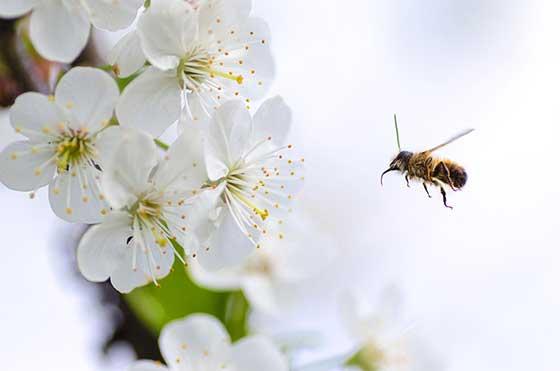L'utilisation de la cire d'abeille en cosmétique